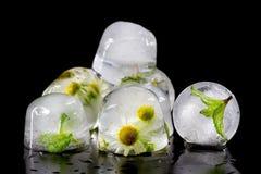 Fleurs de la camomille et des feuilles en bon état congelées en glace Photo libre de droits