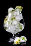 Fleurs de la camomille et des feuilles en bon état congelées en glace Image stock