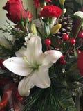 Fleurs de la saison de Noël images libres de droits