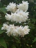 Fleurs de la terre photographie stock