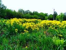 Fleurs de la ville images libres de droits