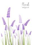 Fleurs de lavande Photos libres de droits