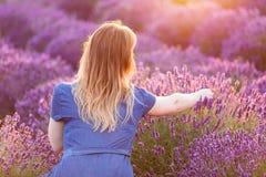 Fleurs de lavande de cueillette de jeune femme au coucher du soleil image libre de droits