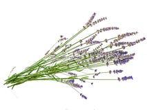 Fleurs de lavande d'isolement au-dessus du blanc Photographie stock libre de droits