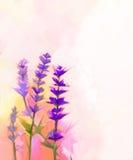 Fleurs de lavande de plan rapproché de peinture à l'huile Image stock