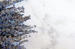 Fleurs de lavande sur le fond de marbre Images stock