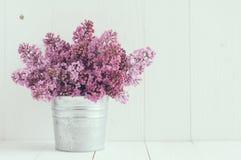 Fleurs de lilas Image libre de droits
