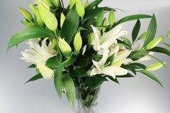 Fleurs de Lilium sur le fond blanc Photo libre de droits