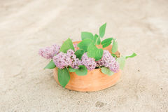 Fleurs de Lillac dans le vieux séparateur Photographie stock libre de droits