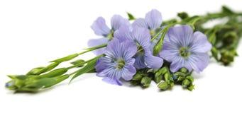 Fleurs de lin textile Photos libres de droits