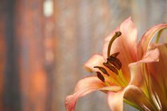 Fleurs de lis Image libre de droits