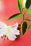 Fleurs de lis, fond d'automne Photographie stock libre de droits