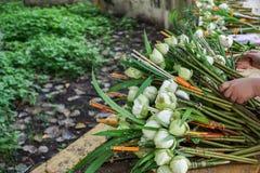 Fleurs de lotus de offre dans un temple bouddhiste Images libres de droits