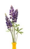 Fleurs de lupin dans le vase Photographie stock libre de droits
