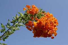 Fleurs de luxe Photo libre de droits