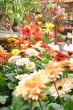 Fleurs de mélange de montagne de Cameron Image libre de droits