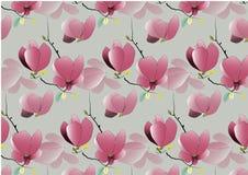 Fleurs de magnolia sur le fond blanc Illustration de vecteur Photo libre de droits