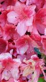 Fleurs de mai Image stock