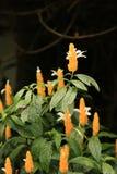 Fleurs de mai dans un jardin Image libre de droits