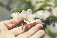Fleurs de main d'homme sur l'arbre photos libres de droits