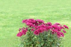 Fleurs de maman Images stock