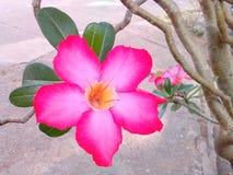 Fleurs de manière fascinante Photographie stock