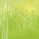 Fleurs de marais Image libre de droits