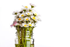 Fleurs de marguerite images stock