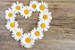 Fleurs de marguerite dans la forme de coeur Images libres de droits