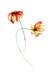 Fleurs de marguerite de Gerber Image stock