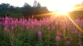 Fleurs de matin Photo stock