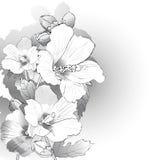 Fleurs de mauve en noir et blanc illustration libre de droits