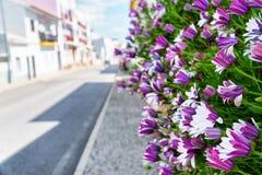 Fleurs de midi menant en bas de la rue par temps ensoleillé photos libres de droits