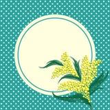 Fleurs de mimosa et cadre de cercle illustration libre de droits