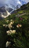 Fleurs de montagne Photographie stock libre de droits