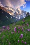Fleurs de montagne Photographie stock