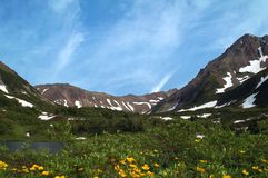 Fleurs de montagne. Images stock