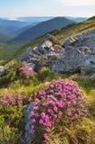 Fleurs de montagne Photo libre de droits