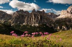 Fleurs de montagne Photo stock