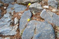 Fleurs de montagne Images stock