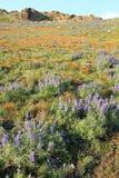 Fleurs de montagne avec des crêtes photo libre de droits