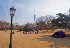 Fleurs de montre de touristes en parc photographie stock libre de droits