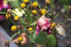 Fleurs de mort Images stock