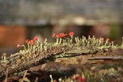 Fleurs de mousse photos libres de droits