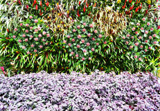 Fleurs de mur Photographie stock libre de droits
