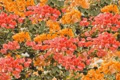 Fleurs de mur uniques Photos stock