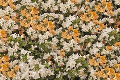 Fleurs de mur uniques Photo stock