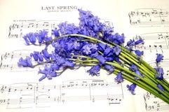 Fleurs de musique et de jacinthe des bois de feuille de ressort Image stock
