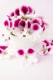 Fleurs de pélargonium dans une tasse de thé blanche Images stock