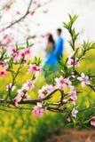 Fleurs de pêche avec les couples affectueux Photo libre de droits